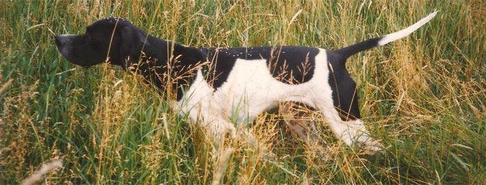 Villestoftes Maja har stand i højt græs