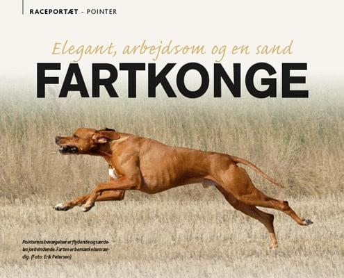 DKK raceportræt om Pointeren