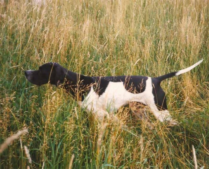 Maja i stand i højt græs